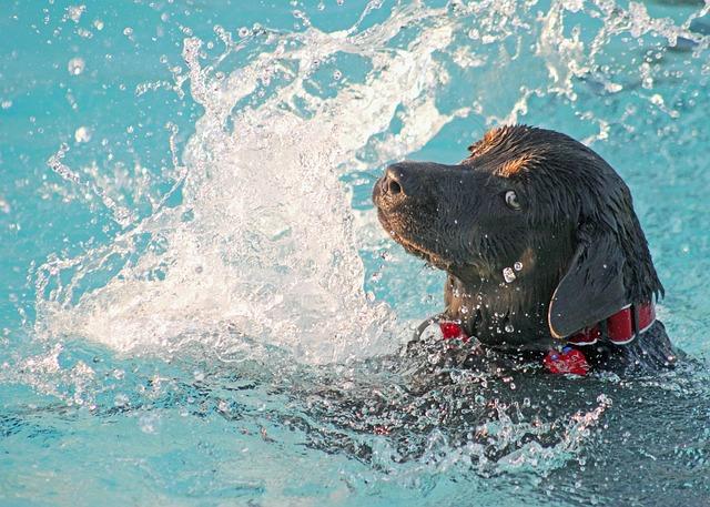 Pes v bazénu.jpg